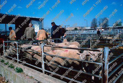 Sheep Sale, Norwich Cattle Market 1990, Norfolk, England, UK, - stmphoto 180732